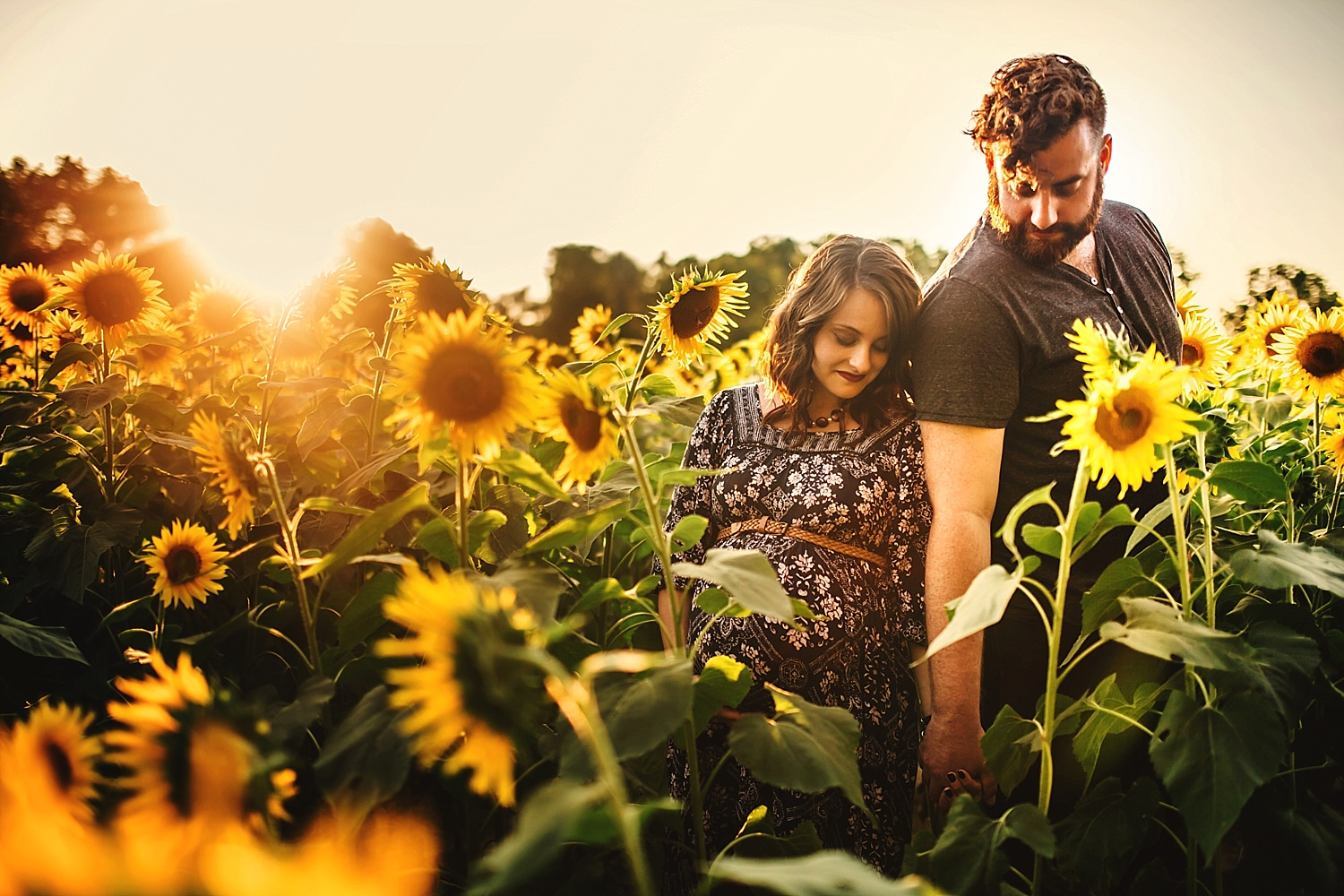 maternity photos taken in sunflower fields in yellow springs ohio